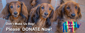 Dogs Appealing for Donations