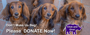 Dachshunds Asking for Donations